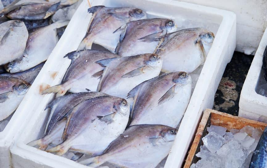 Pescado apilado en una caja para subastar